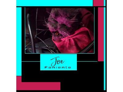 JOE FANIENTE